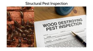 Home Pest Inspections Blaine Washington